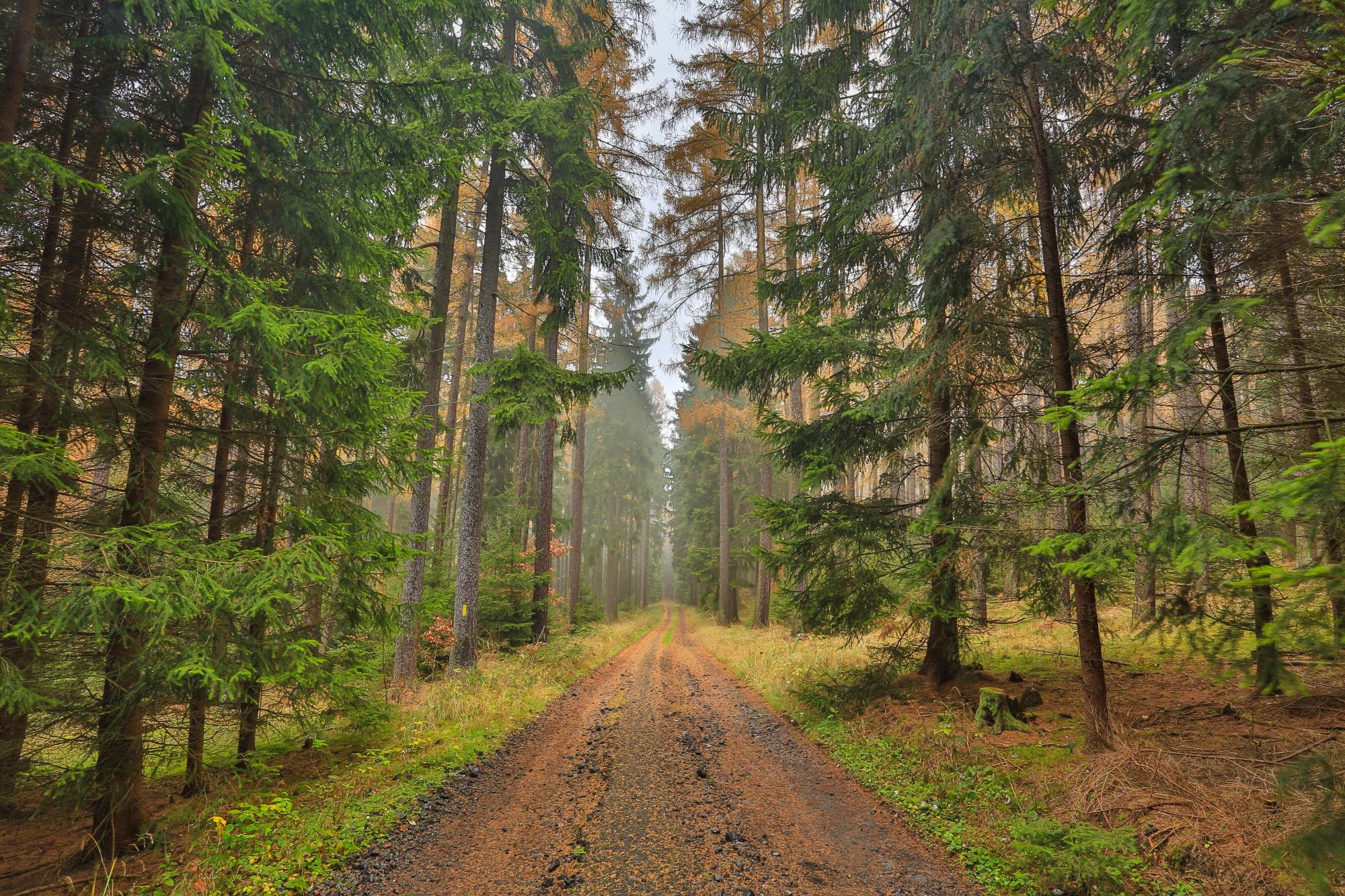 5 faktorů které ovlivňují cenu lesů